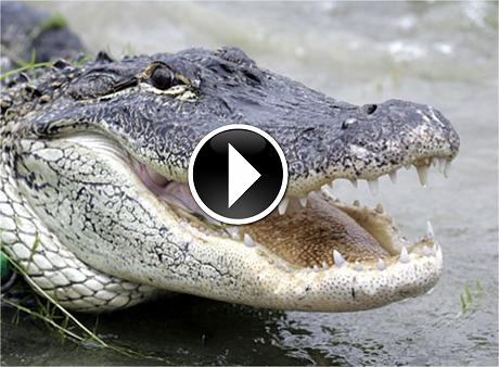 dangerous reptiles